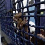 On the Palestinian Prisoners' Day,Prisoners' Suffering in Israeli Jails Continues